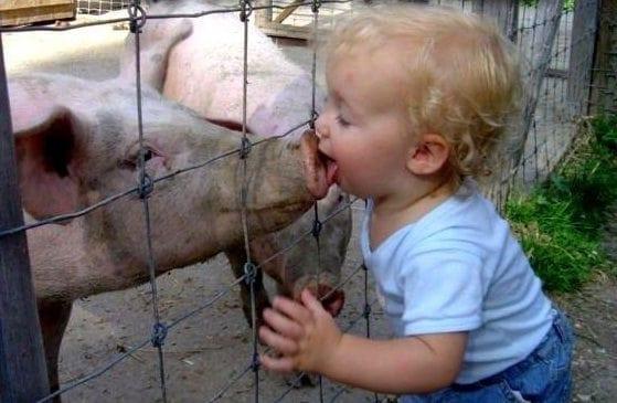 swine_flu_spread