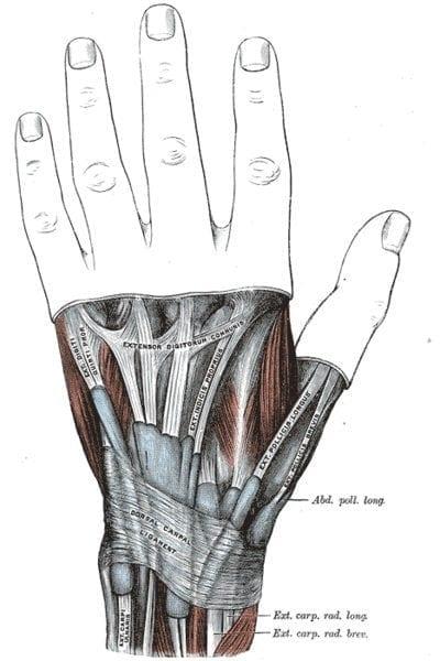 hand-extensors-gray