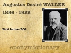 Augustus Desiré Waller (1856 – 1922) 3