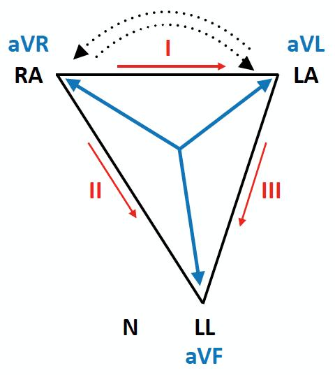 ECG Leads Einthoven Triangle