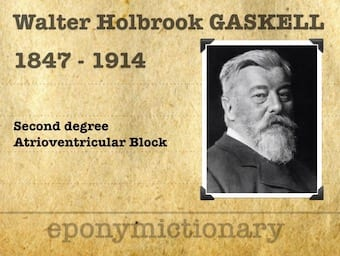 Walter-Holbrook-Gaskell-1847-1914-31