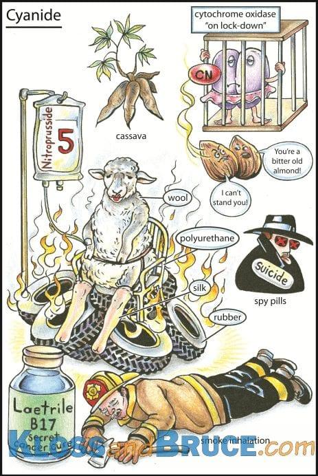 Cyanide Tox Flashcard