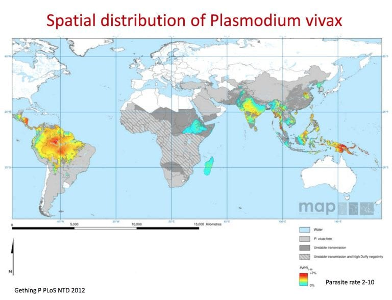 P.vivax map