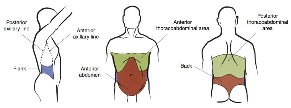 areas of the abdomen
