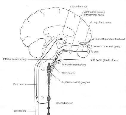 oculosympathetic pathway