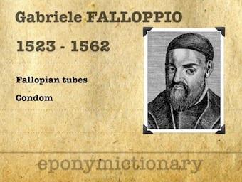 Gabriele Falloppio (1523 – 1562) 340