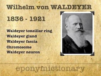 Heinrich Wilhelm Gottfried Waldeyer-Hartz (1836 – 1921) 340
