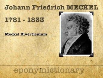 Johann Friedrich Meckel (the younger) (1781 – 1833) 1200