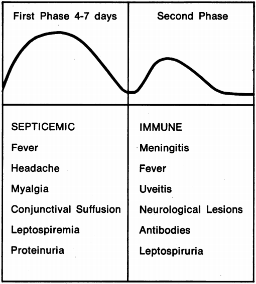 The stages of leptospirosis Edwards and Domm 1960