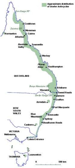 ixodid-tick-australia