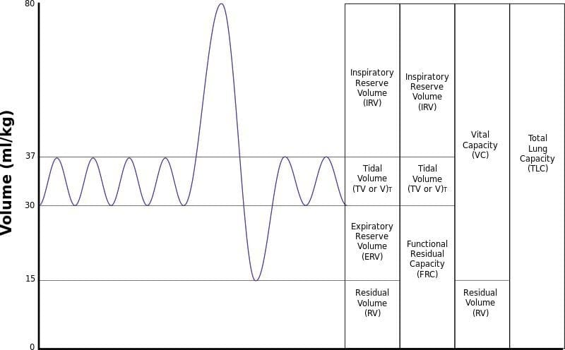 lung-volumes