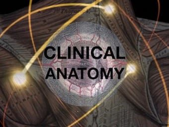 BSCC Clinical Anatomy 340