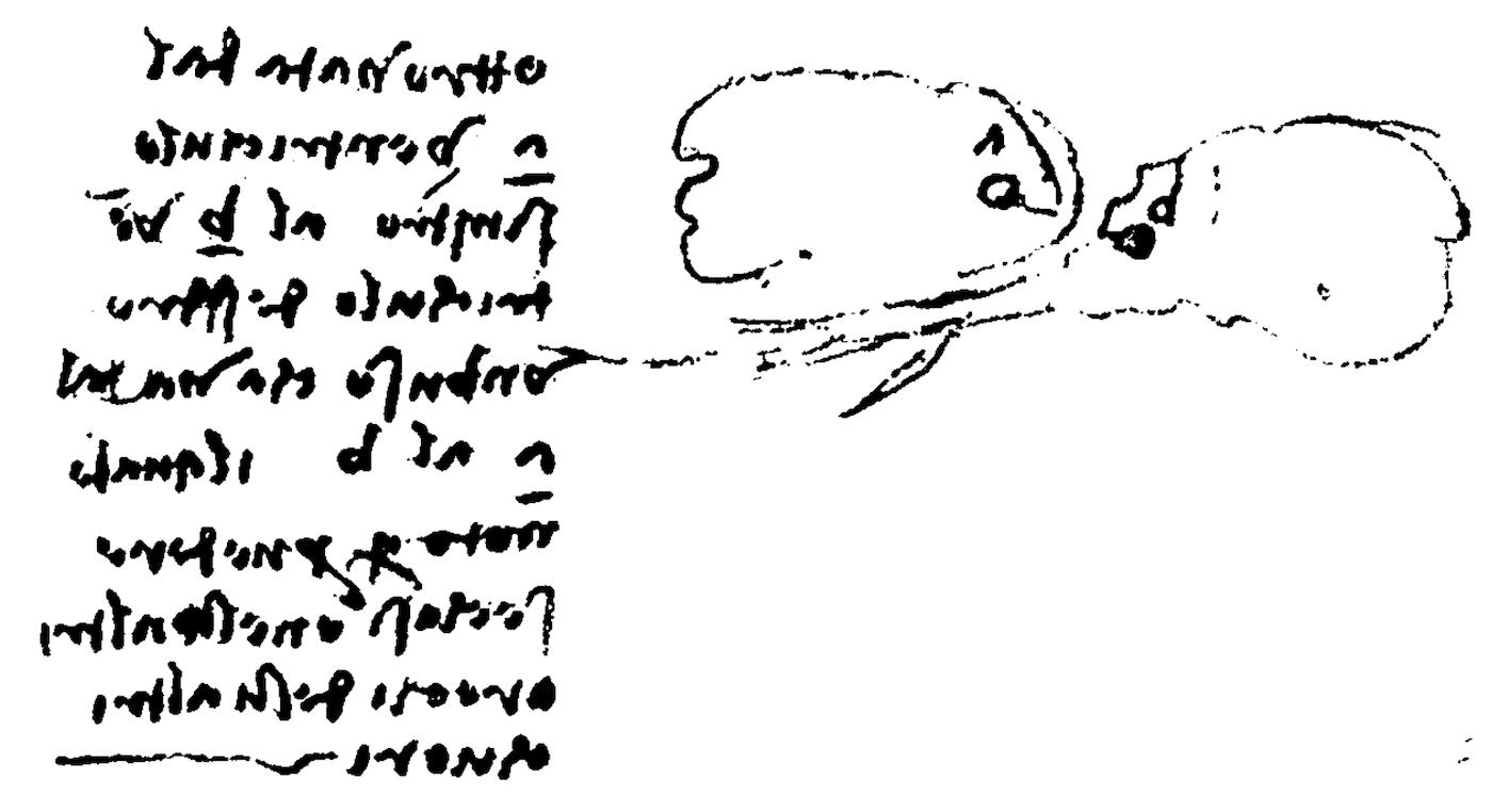 Quaderni de Anatomia II da Vinci 1513