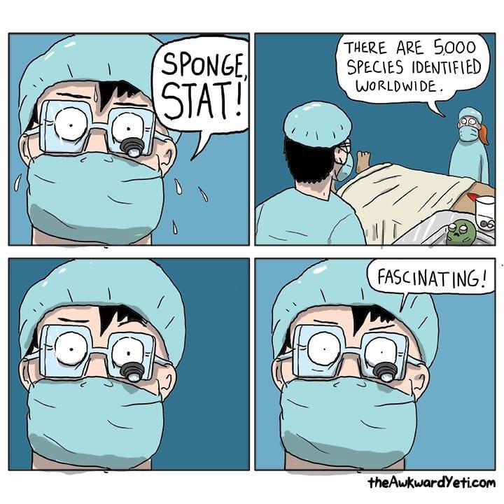 sponge stat