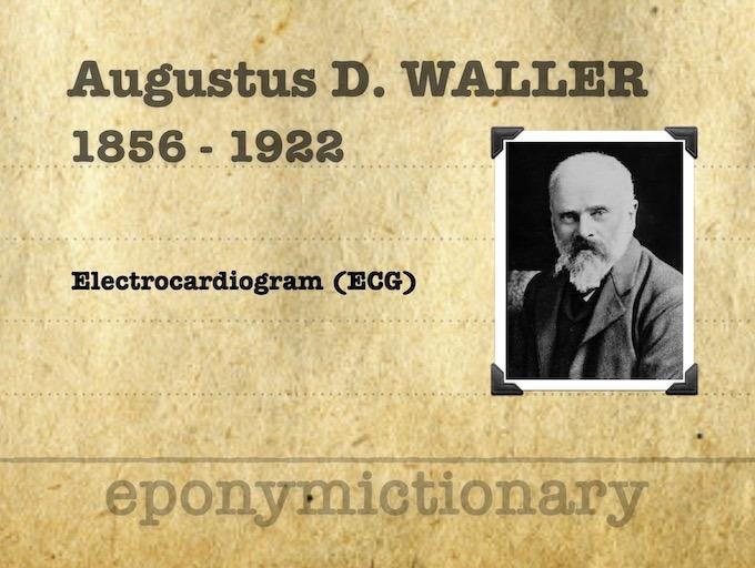 Augustus Desiré Waller (1856 – 1922) 340 3