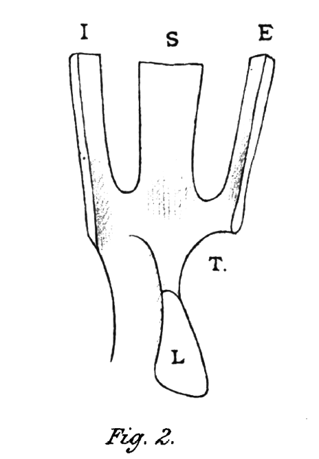 Lockwood's tendon of the eye (1885)