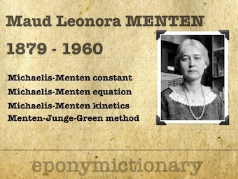 Maud Leonora Menten (1879 - 1960) 340