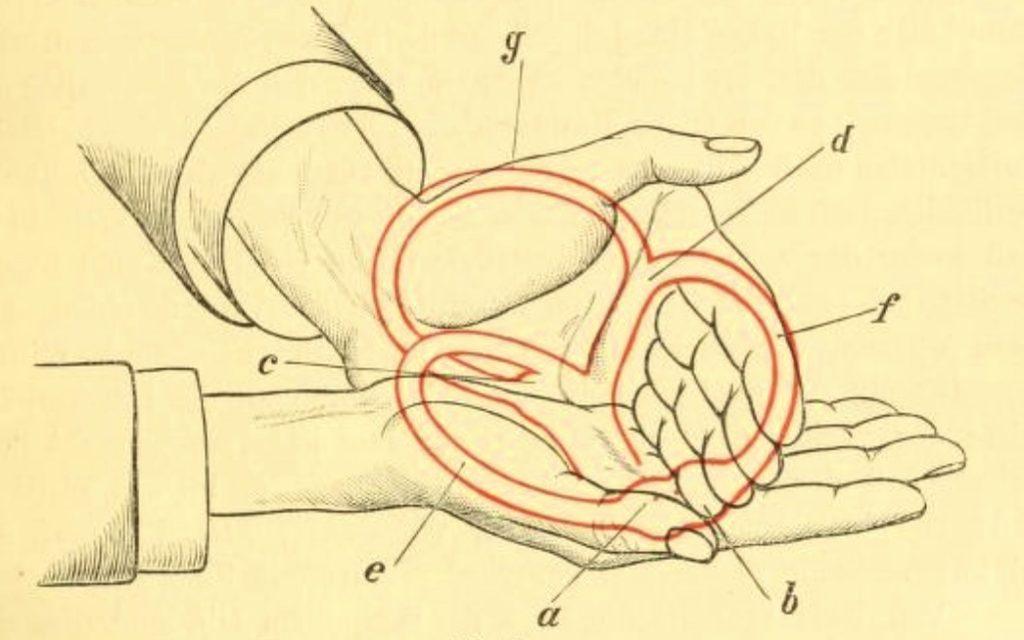 Bárány 1907 bogengänge semicircular canals