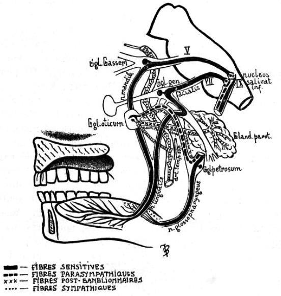 Frey syndrome (1923) Revue Neurologique 2
