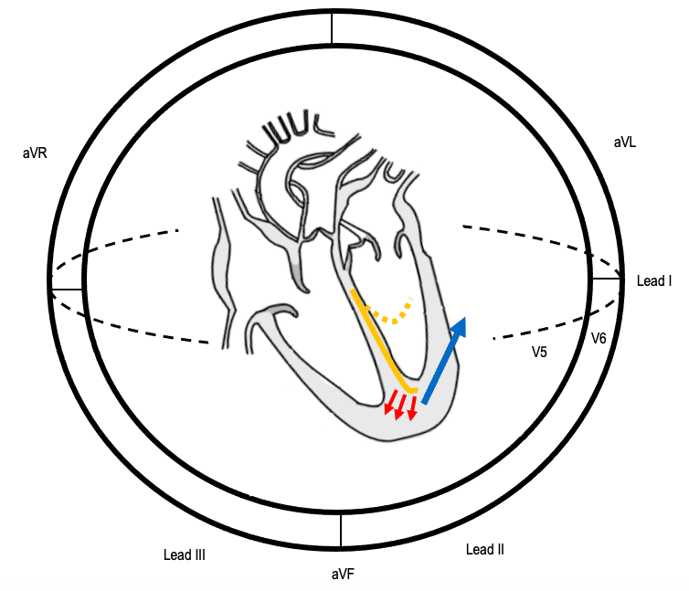 Sequence of conduction in LAFB