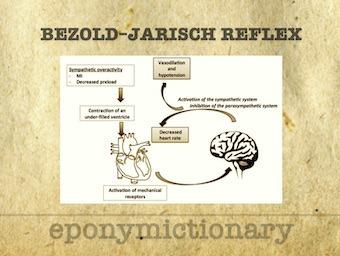 Bezold–Jarisch reflex 340