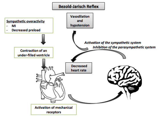 Bezold-Jarisch_reflex